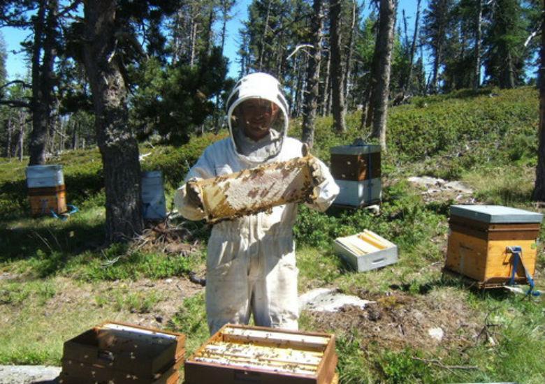 Le miel du Languedoc - Comparelend